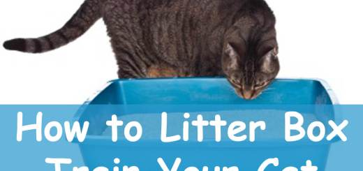 Litter Box Training : How to get Your Cat to Use One | Cat Mania