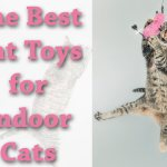 The Best Cat Toys for Indoor Cats | Cat Mania | For Cat Lovers