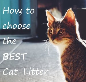 How to Choose the Best Cat Litter : Comparison Review