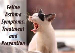 Feline Asthma Symptoms, Treatment & Prevention