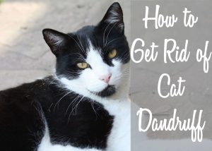 How to Get Rid of Cat Dandruff