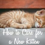 How to Care for a New Kitten | Cat Mania | For Cat Lovers