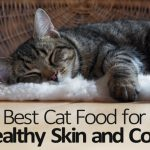 Best Cat Food for Healthy Skin and Coat
