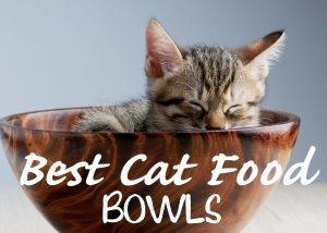 Best Cat Food Bowls