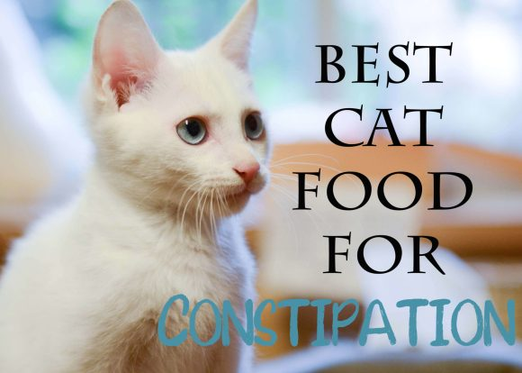 Best Cat Food for Constipation