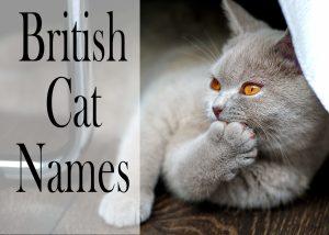 British Cat Names : 150 +Brilliant Names for your Cat