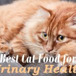 Best Cat Food for Urinary Health