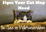Signs Your Cat May Need to See a Veterinarian