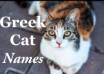 Greek Cat Names : 50 + Mythological Names