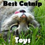 BEST CATNIP TOYS FOR YOUR CAT