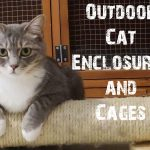 Outdoor Cat Enclosures and Cages