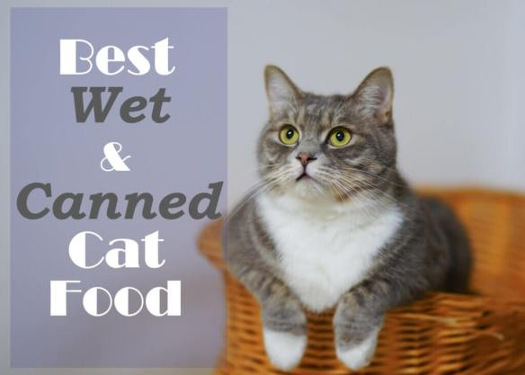 Best Wet and Canned Cat Food