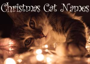 Christmas Cat Names – 60 + Merry Names