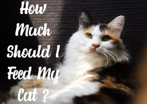 How Much Should I Feed My Cat ?
