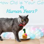 How Old is Your Cat in Human Years?
