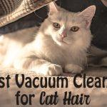 Best Vacuum Cleaner for Cat Hair