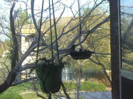 The birds love the free food, and I love the hard-to-kill succulent plant I've got!
