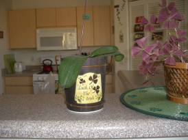 If only I could get my celebratory Orchid to bloom again... Ah well - at least it's still alive.