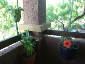The 'plant corner'
