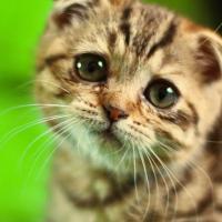 Qu'est ce que je fais de mon chat si je pars en weekend ou en vacances ?