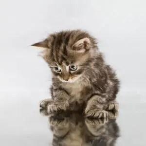 Cute Female Cat Names