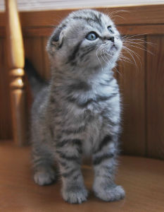 Cute Names for Cats