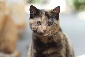 Tortoiseshell Cat Names_Cat Names City_Light Brown