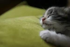 Cat Names Female