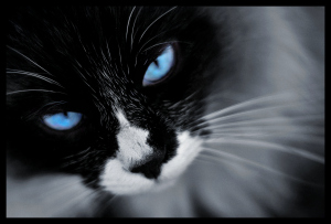 Unisex-cat-names_cat-names-city_black-and-white