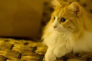 Cat Names Unisex
