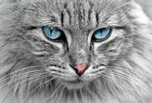 exotic female cat names