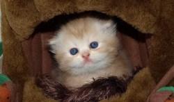 cute kitten names