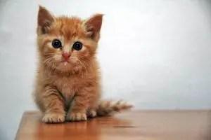 Persian cat names girl