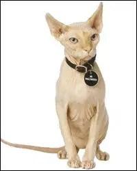famous siamese cat names