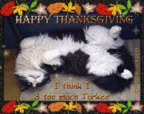 cat-thanksiving9