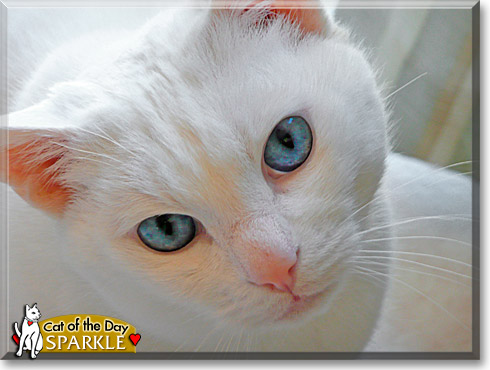 Sparkle, the Cat of the Day