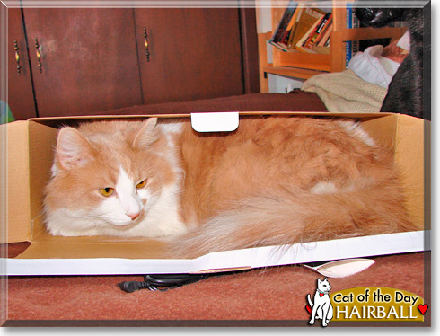 Hairball, the Cat of the Day