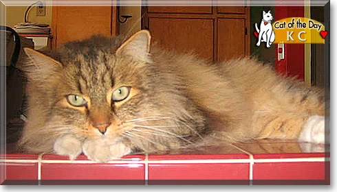 KC, the Cat of the Day