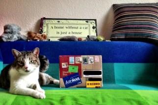 cat-kitty-katze-parcel-birthday-gift-janis_1