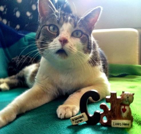 cat-kitty-katze-parcel-birthday-gift-janis_4
