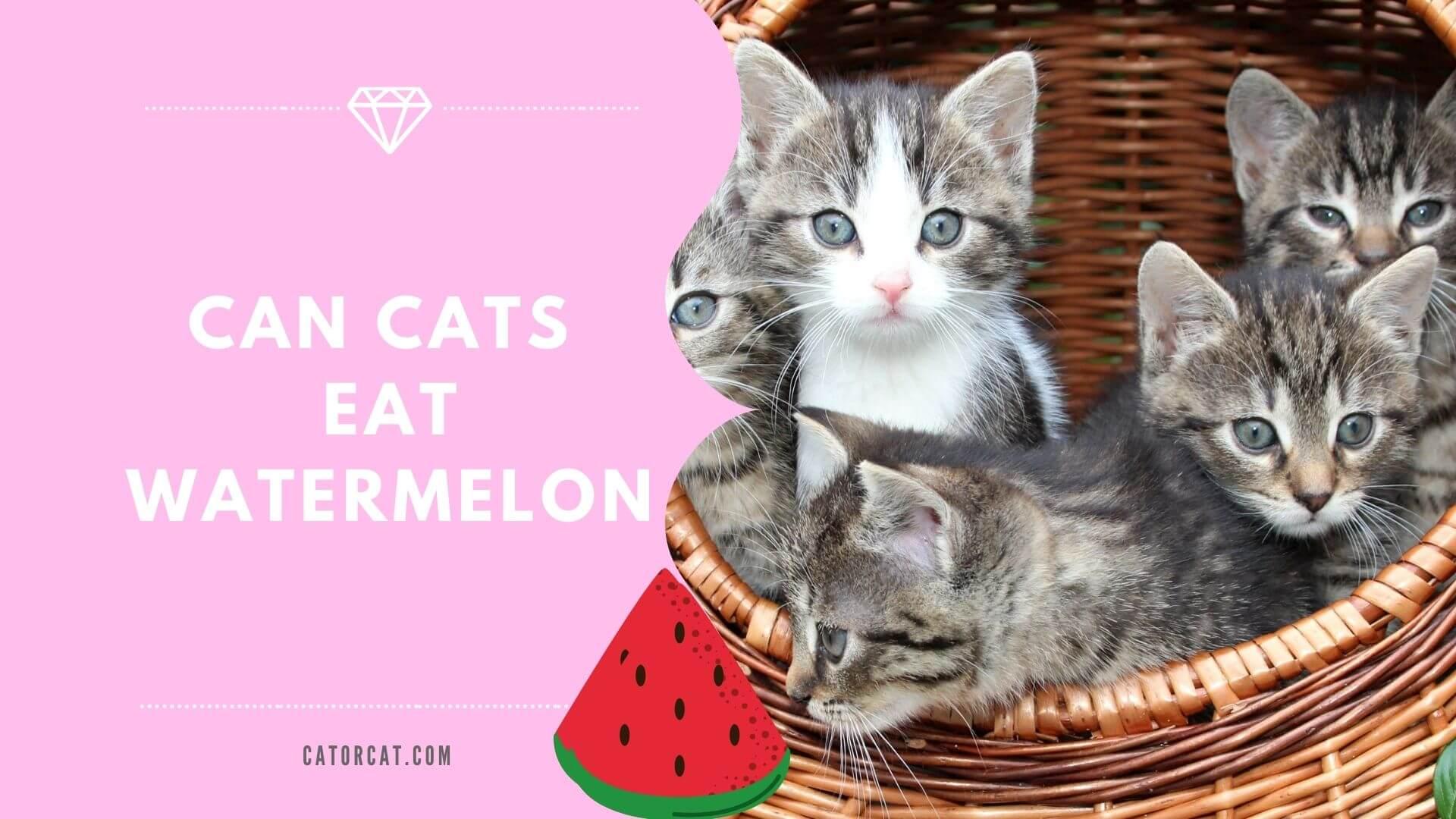 ¿Pueden los gatos comer sandía?
