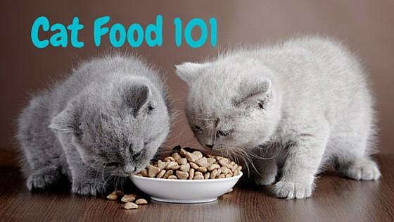 Cat Food 101