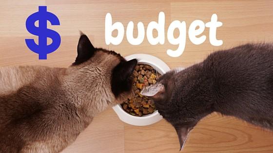 cat food budget