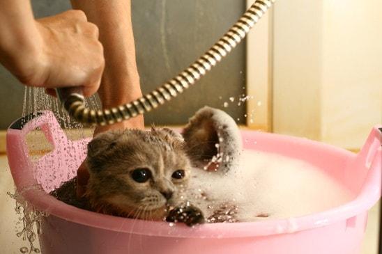 cat loves to take a bath