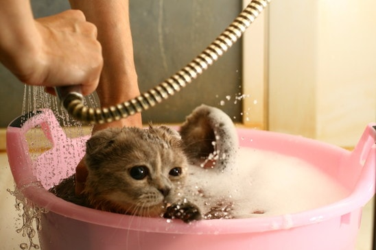 5 Best Flea Shampoo Your Cats Would Love Cat Overdose