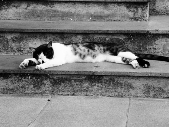 cat sleeping on the stairs