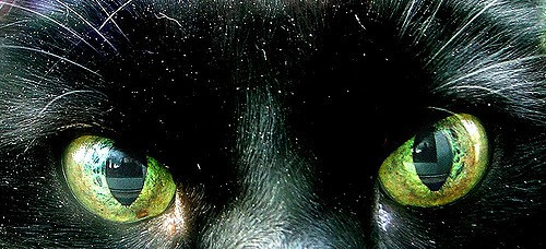 Why Does My Cat Have DANDRUFF? (Treatment And Cure) - Cat Overdose