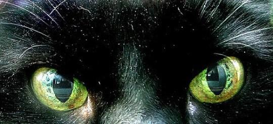 dandruff on a cat