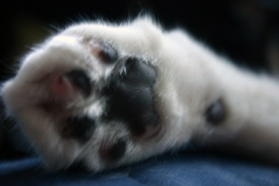 a cats claw