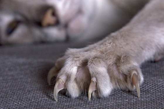 a cat showing its claws